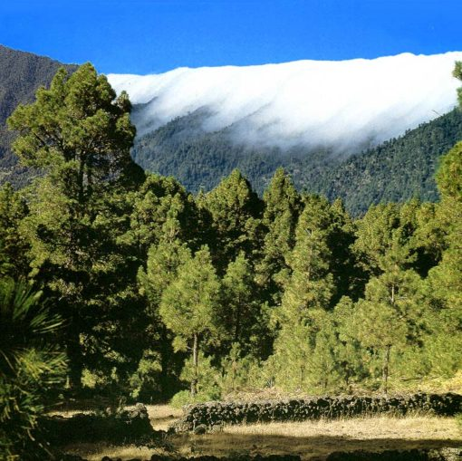 View of the landscape beyond Montaña Quemada on La Palma, Canary Islands