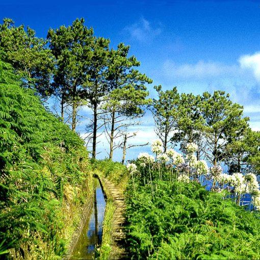 View of the levada Calheta–Ponta do Pargo on Madeira, Portugal