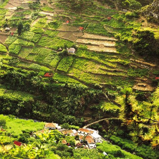 View of terraced hillsides in Madeira, Portugal