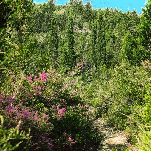 View of the path down to Monodendri Cove on Paxos, Greece