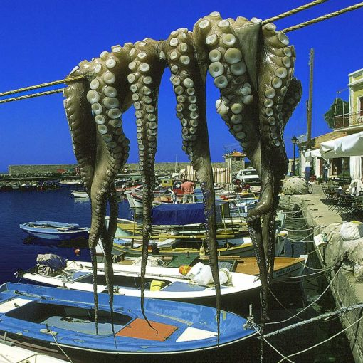 View of octopus drying at the harbour in Molyvos on Lesvos, Greece
