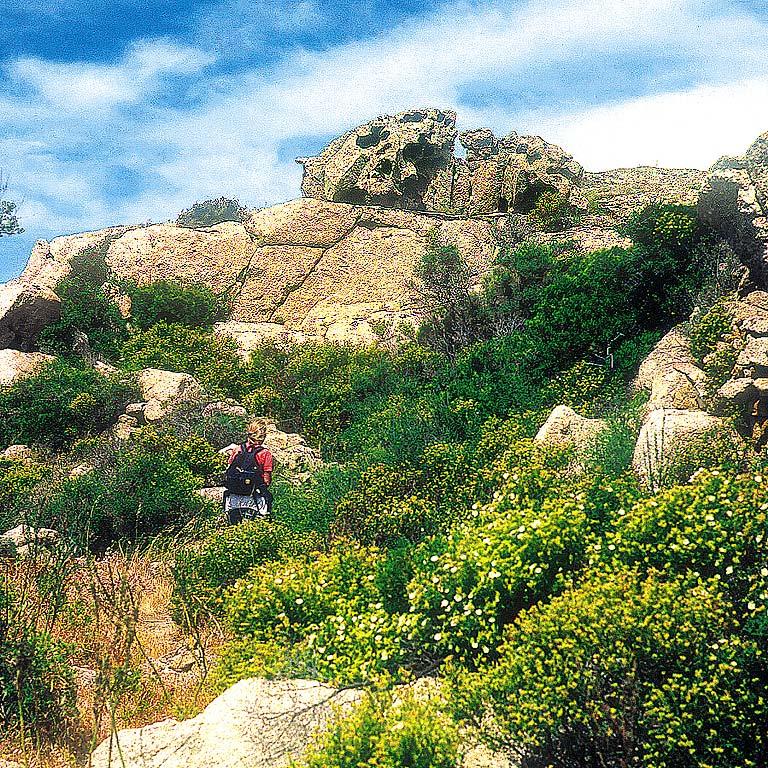 Corsica W&E